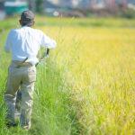 農業体験で農業者をサポート!援農ボランティアとは
